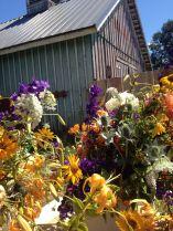 barnflowers