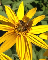 Happy Pollinators