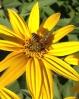 Happy Pollinators